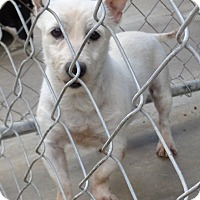 Adopt A Pet :: Ghost - Crump, TN