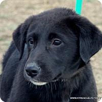 Adopt A Pet :: NIKEY - PRINCETON, KY