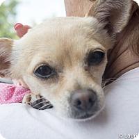 Adopt A Pet :: Bunny - San Marcos, CA