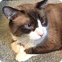 Adopt A Pet :: Rama - Merrifield, VA