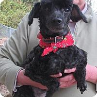 Adopt A Pet :: Tyson - House Springs, MO
