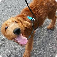 Adopt A Pet :: Joey - Alpharetta, GA