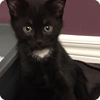 Adopt A Pet :: Smokey - Hamilton, ON