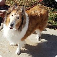 Adopt A Pet :: Tara - Santa Barbara, CA