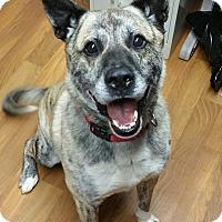Adopt A Pet :: Woody - Lisbon, OH