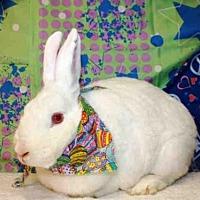 Adopt A Pet :: ROSALYN - San Pedro, CA