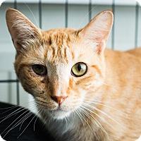 Adopt A Pet :: Erik - Los Angeles, CA