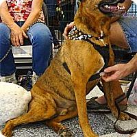 Adopt A Pet :: Mick LOVES water, plays fetch - Sacramento, CA