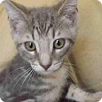 Adopt A Pet :: A596823 - Camarillo, CA