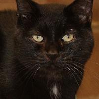 Adopt A Pet :: Bobbie - Savannah, MO