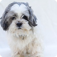 Adopt A Pet :: Chewy - Loomis, CA