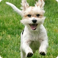 Adopt A Pet :: Gracie - Salem, OR