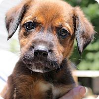 Adopt A Pet :: Foreman - Bedford, VA