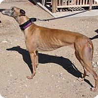 Adopt A Pet :: Dora - Tucson, AZ