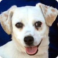 Adopt A Pet :: DORY (video) - Los Angeles, CA