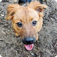 Adopt A Pet :: Alice - Grand Island, FL