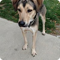 Adopt A Pet :: Uriah - Ashtabula, OH