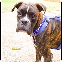 Adopt A Pet :: Ashton - Hurst, TX