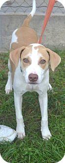 Labrador Retriever Mix Dog for adoption in Beaumont, Texas - Gypsy