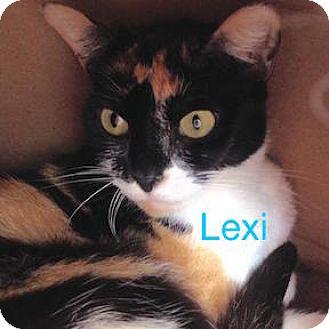 Domestic Shorthair Cat for adoption in Satellite Beach, Florida - Lexi