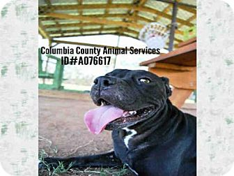 Pit Bull Terrier Mix Dog for adoption in Grovetown, Georgia - VITA