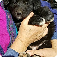 Adopt A Pet :: Baby Girl Betsy - Baileyton, AL