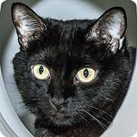 Adopt A Pet :: Mouse - Prescott, AZ