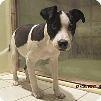 Adopt A Pet :: BRENDA - La Mesa, CA