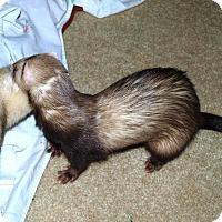 Adopt A Pet :: Athena - Acworth, GA