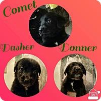 Adopt A Pet :: Donner - Gainesville, GA