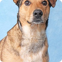 Adopt A Pet :: Mackelroy - Encinitas, CA