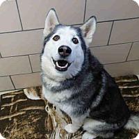 Adopt A Pet :: KLONDIKE - Fort Wayne, IN