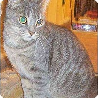 Adopt A Pet :: ISIS (la belle Fille) - Chapman Mills, Ottawa, ON