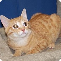 Adopt A Pet :: Hamish - Colorado Springs, CO