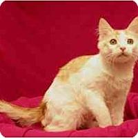 Adopt A Pet :: Brady - Sacramento, CA