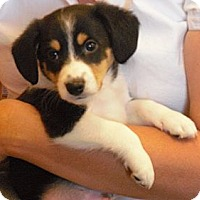 Adopt A Pet :: Skip - Wickenburg, AZ