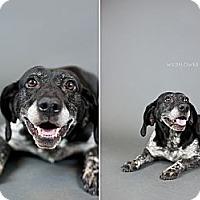 Adopt A Pet :: Dayanira - Muskegon, MI