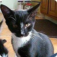 Adopt A Pet :: Cowboy - Narberth, PA