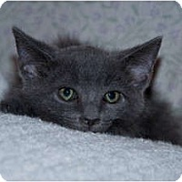 Adopt A Pet :: Cloud - New Egypt, NJ