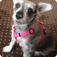 Adopt A Pet :: Gina - Rockaway, NJ