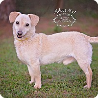 Adopt A Pet :: Jinx - Fort Valley, GA