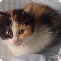 Adopt A Pet :: Rivka - Fairborn, OH