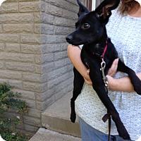 Adopt A Pet :: Pippa - Washington, PA