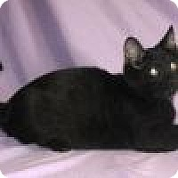 Adopt A Pet :: Hunter - Powell, OH