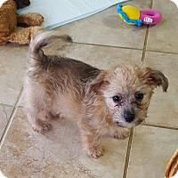 Adopt A Pet :: Franklin - Huntsville, AL
