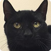 Adopt A Pet :: Krampus - Winchester, CA