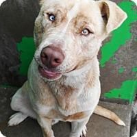 Adopt A Pet :: Zeus - Redding, CA