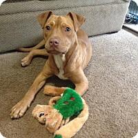 Adopt A Pet :: Monroe - Dayton, OH