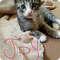 Adopt A Pet :: Joy - Berkeley Hts, NJ
