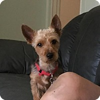Adopt A Pet :: Isaiah - Bellbrook, OH